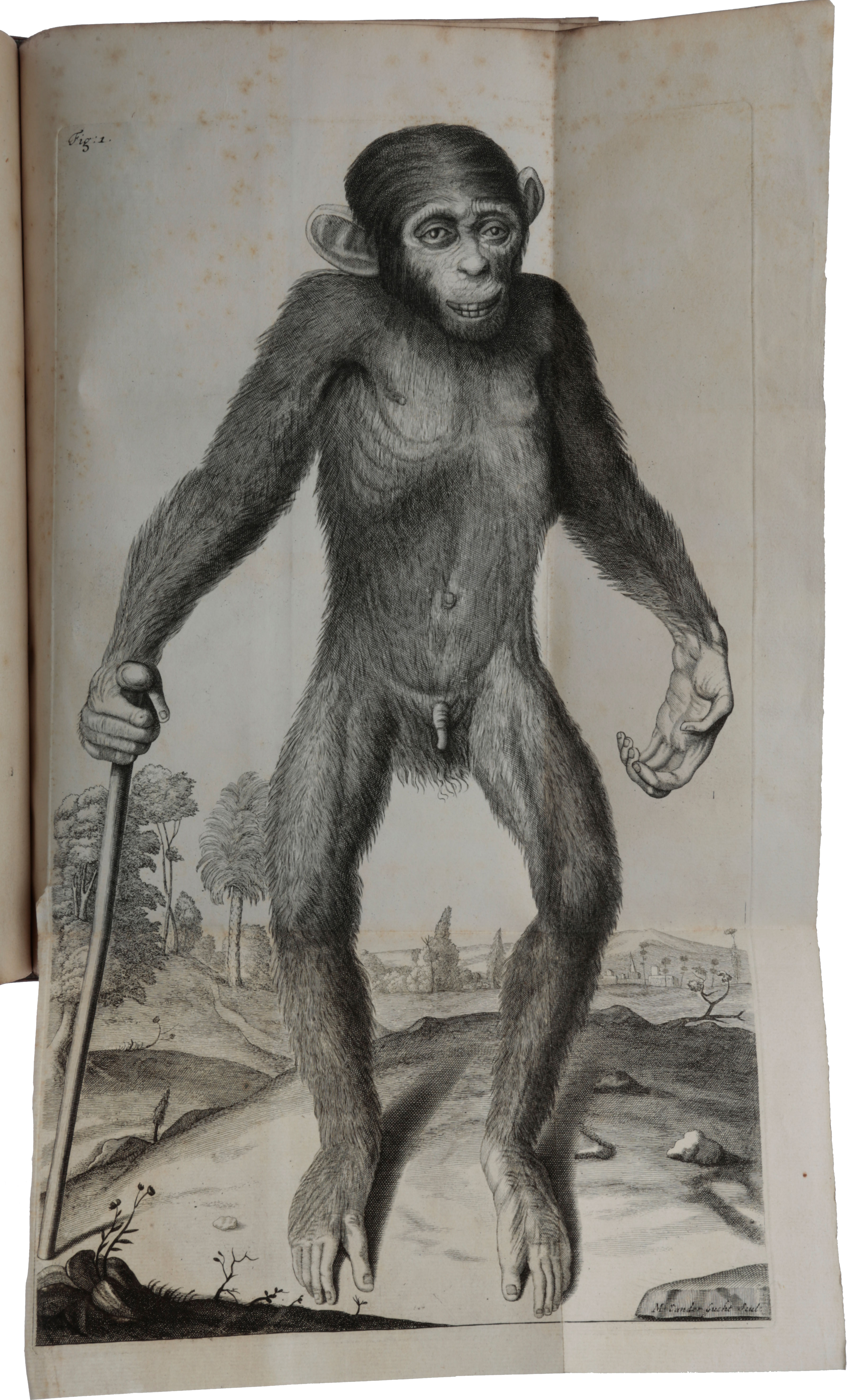 Orang-Outang, sive homo sylvestris; or, the anatomie of a pygmie compared with that of a monkey, an ape and a man. To which is added, a philological essay concerning the pygmies, the cynocephali, the satyrs, and sphinges of the Ancients. Wherein it will appear that they are all either apes or monkeys, and not men, as formerly pretended. Edward TYSON.