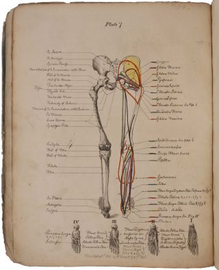 A Description of the Muscles of the Human Body, as they appear on Dissection; with the Synonyma of Cowper, Winslow, Douglas, Albinus, and Innes, and the Nomenclature of Dumas … With prints and maps, showing the insertion of muscles.