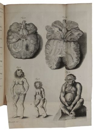 Orang-Outang, sive homo sylvestris; or, the anatomie of a pygmie compared with that of a monkey, an ape and a man. To which is added, a philological essay concerning the pygmies, the cynocephali, the satyrs, and sphinges of the Ancients. Wherein it will appear that they are all either apes or monkeys, and not men, as formerly pretended.